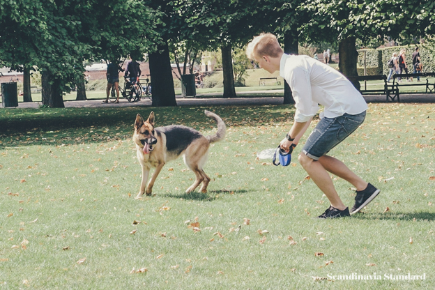 Playing with the dog - Pet Care in Denmark | Scandinavia Standard