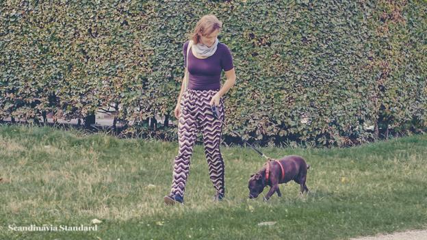 Walking the dog - Pet Care in Denmark   Scandinavia Standard 3