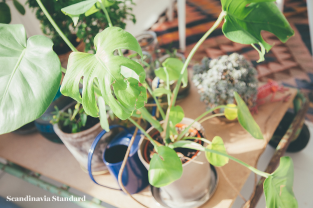 Plants in Sun Room | Scandinavia Standard.jpg