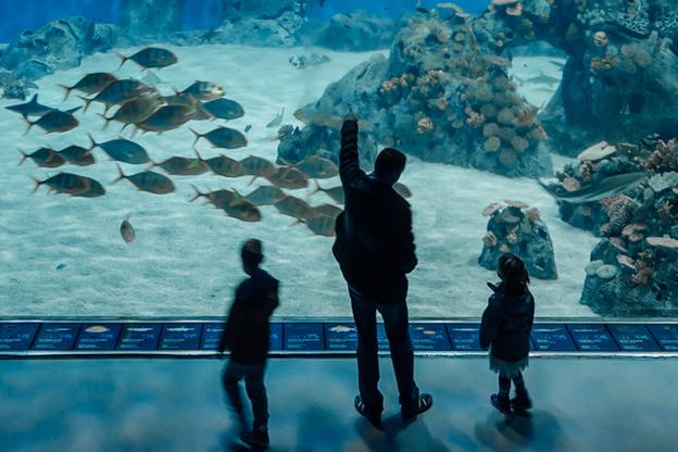 3. Den Bla Planet Aquarium Copenhagen | Scandinavia Standard