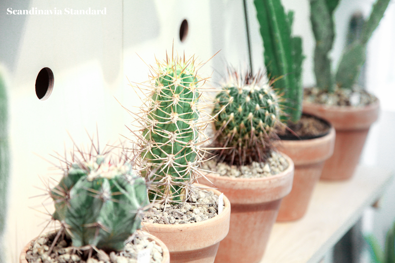 Kaktus Copenhagen Cacti on Shelf Display - Jægersborggade | Scandinavia Standard