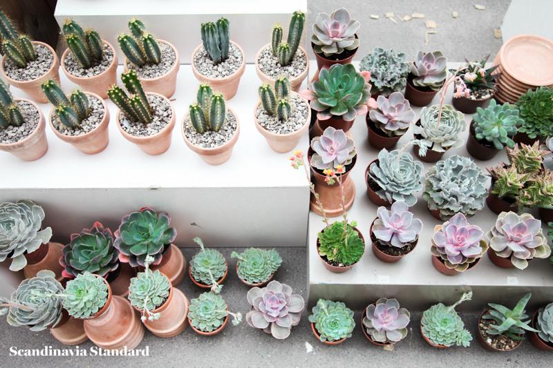 Kaktus Copenhagen Cacti on Street Display - Jægersborggade | Scandinavia Standard