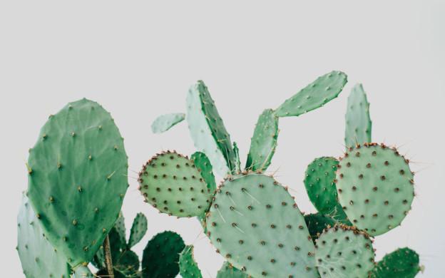 Kaktus Copenhagen Cactus Shop Jaegersborggade Nørrebro Header | Scandinavia Standard