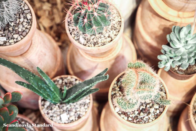 Kaktus Copenhagen - Cute Plants | Scandinavia Standard