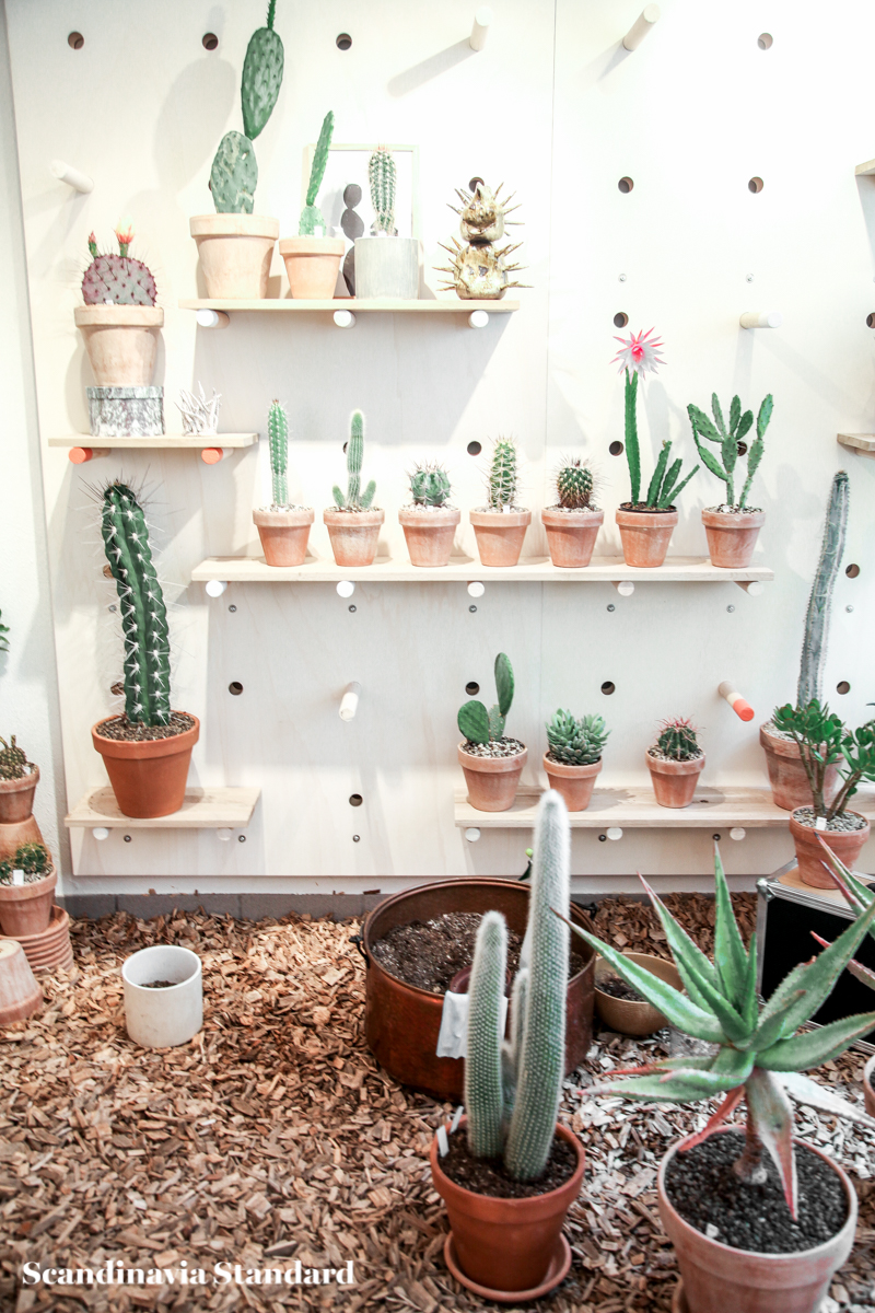 Kaktus Copenhagen - Jægersborggade | Scandinavia Standard