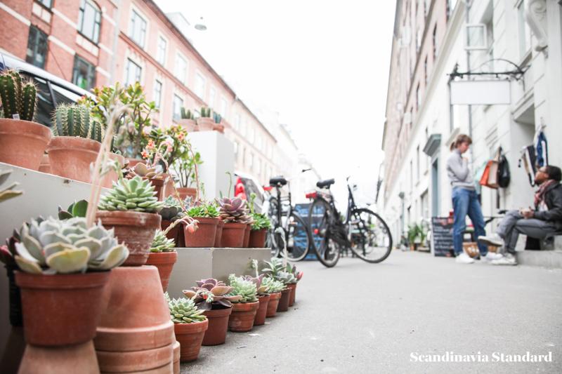 Kaktus Copenhagen - Jægersborggade Street View | Scandinavia Standard