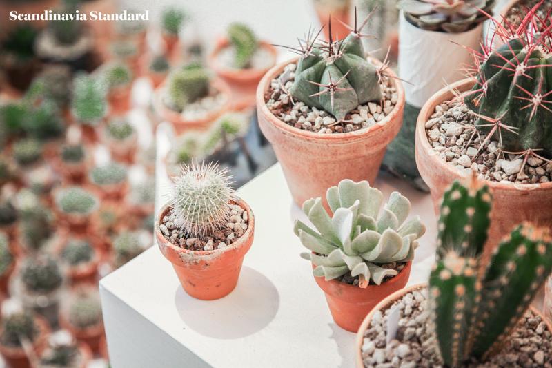 Kaktus Copenhagen - Plant Display - Jægersborggade | Scandinavia Standard