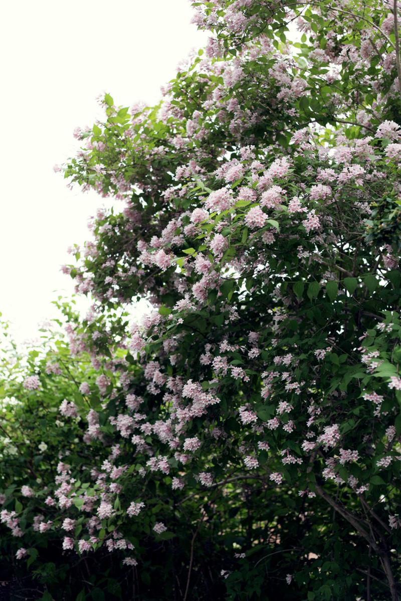 Swedish Midsummer - Flowers - Emily Dahl | Scandinavia Standard