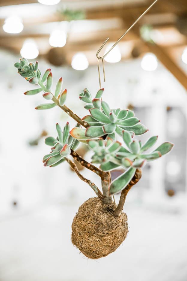 Planteplaneter Copenhagen Single Plant KOKEDAMA   Scandinavia Standard