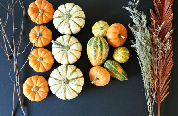 Mini pumpkins Mad Mad Bodega