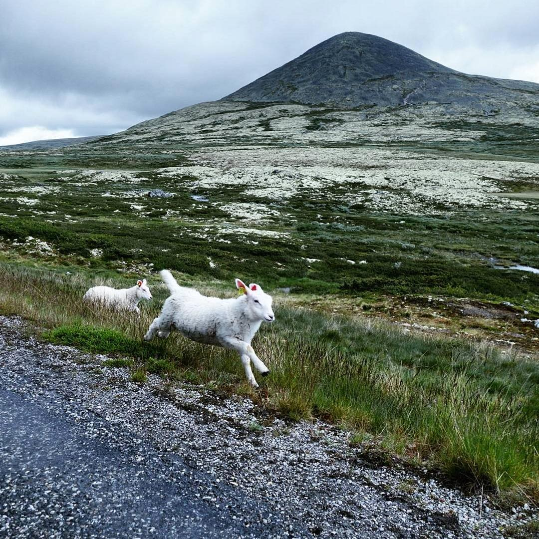 Scandi Six- Norwegian Instagram Account to Follow - Sheepwithaview