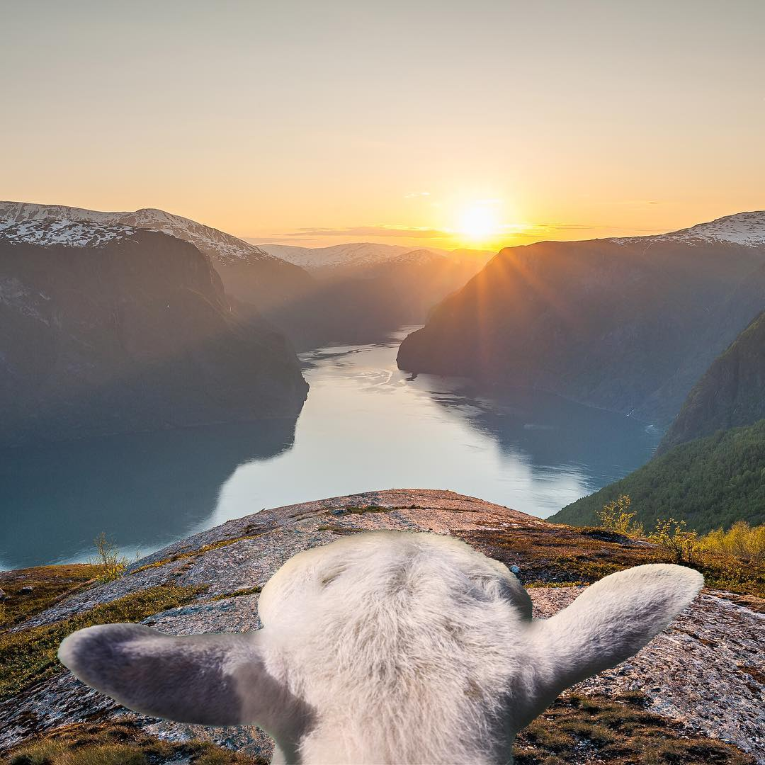 Scandi Six: Norwegian Instagram Account to Follow - Sheepwithaview