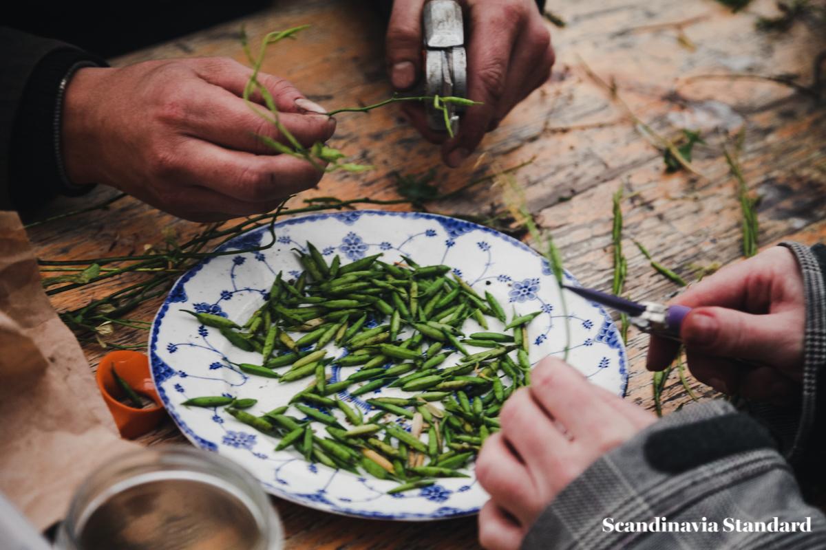 ostergro-copenhagn-rooftop-garden-cuttings-scandianvia-standard