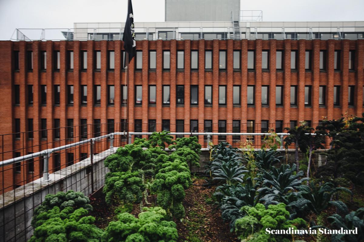 ostergro-copenhagn-rooftop-garden-plants-scandianvia-standard