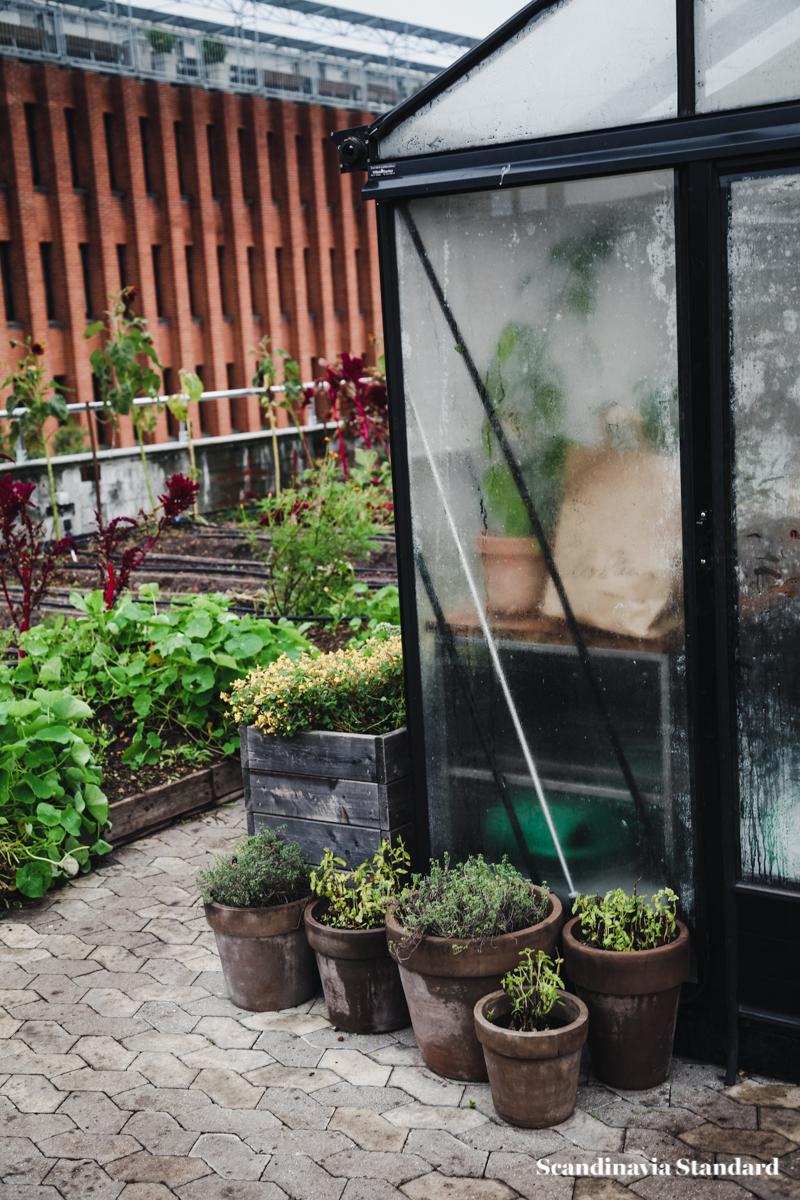 ostergro-copenhagn-rooftop-garden-scandianvia-standard