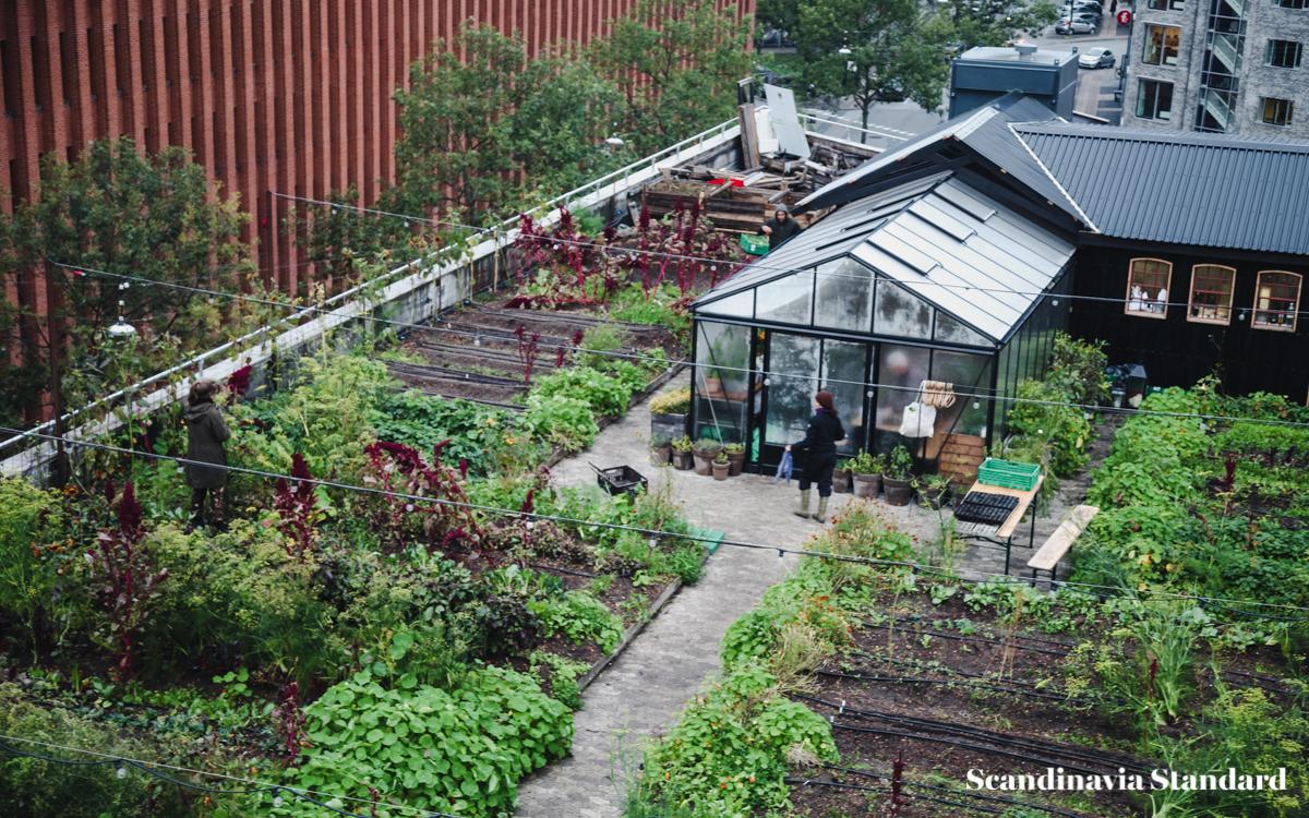 ostergro-copenhagn-rooftop-garden-view-scandianvia-standard