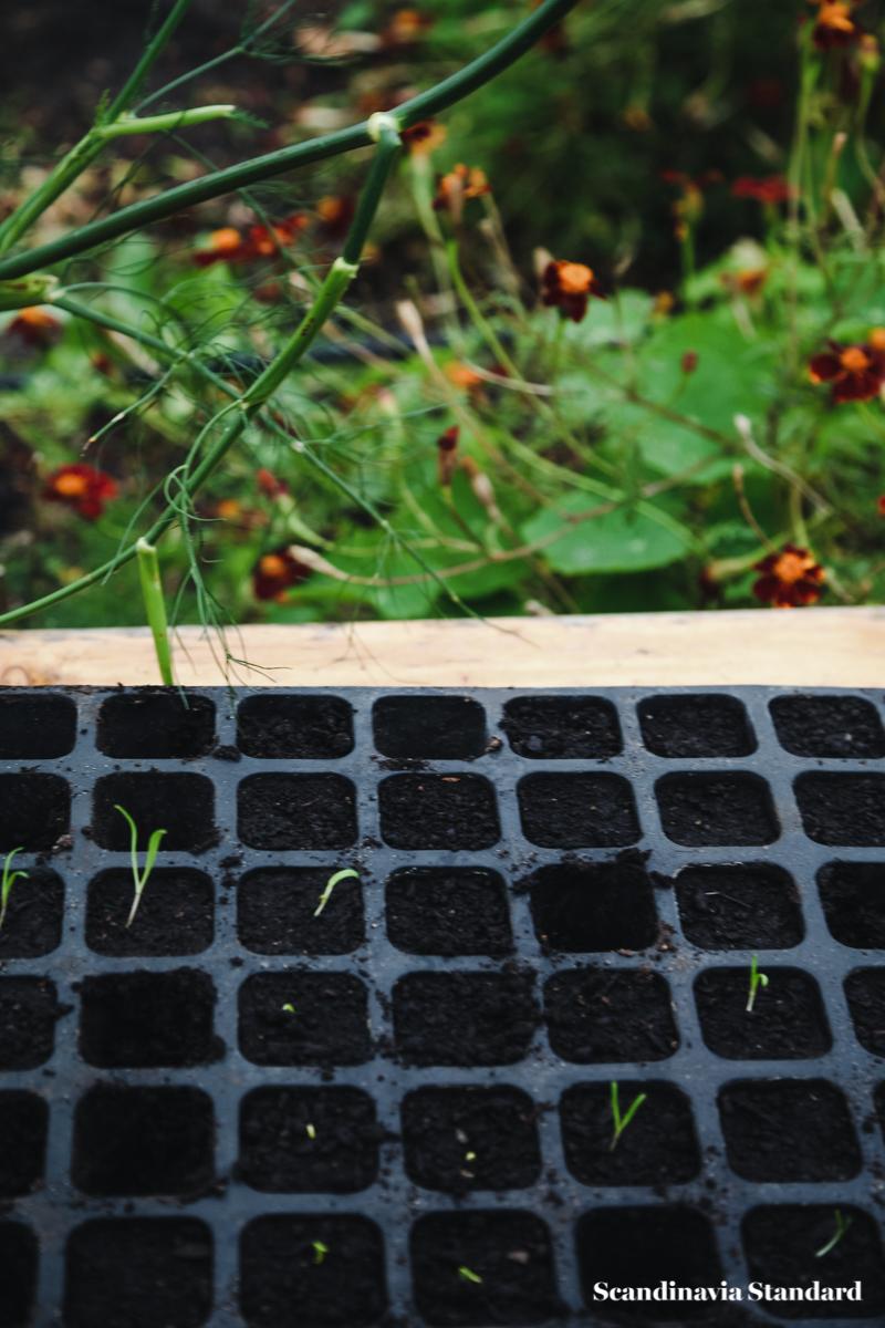 ostergro-seedlings-copenhagn-rooftop-garden-scandianvia-standard