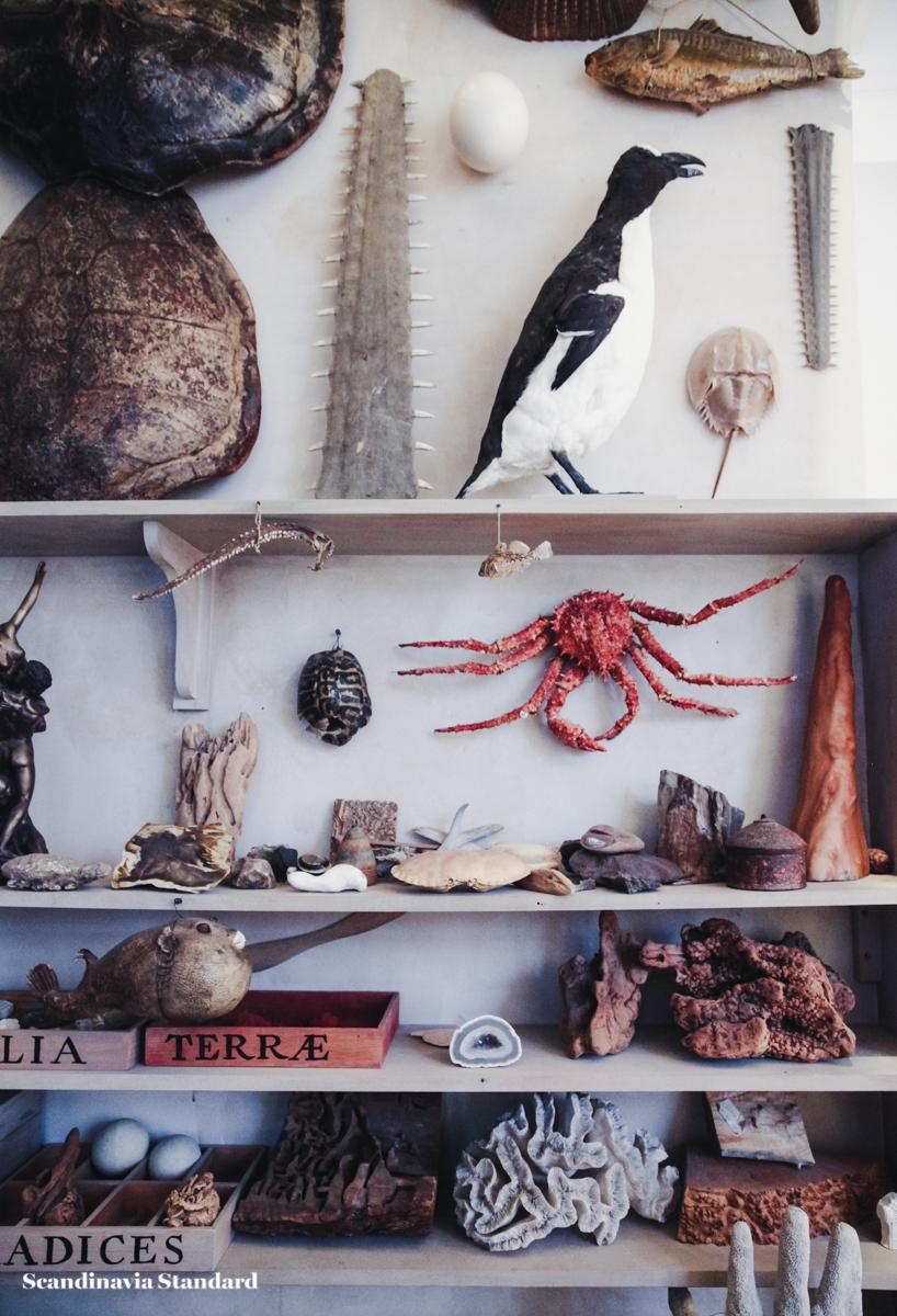 Taxidermy Crabs and Animals - Geological Museum - Geologisk Museum Copenhagen - Cabinet of Curiosities - Ole Worm | Scandinavia Standard