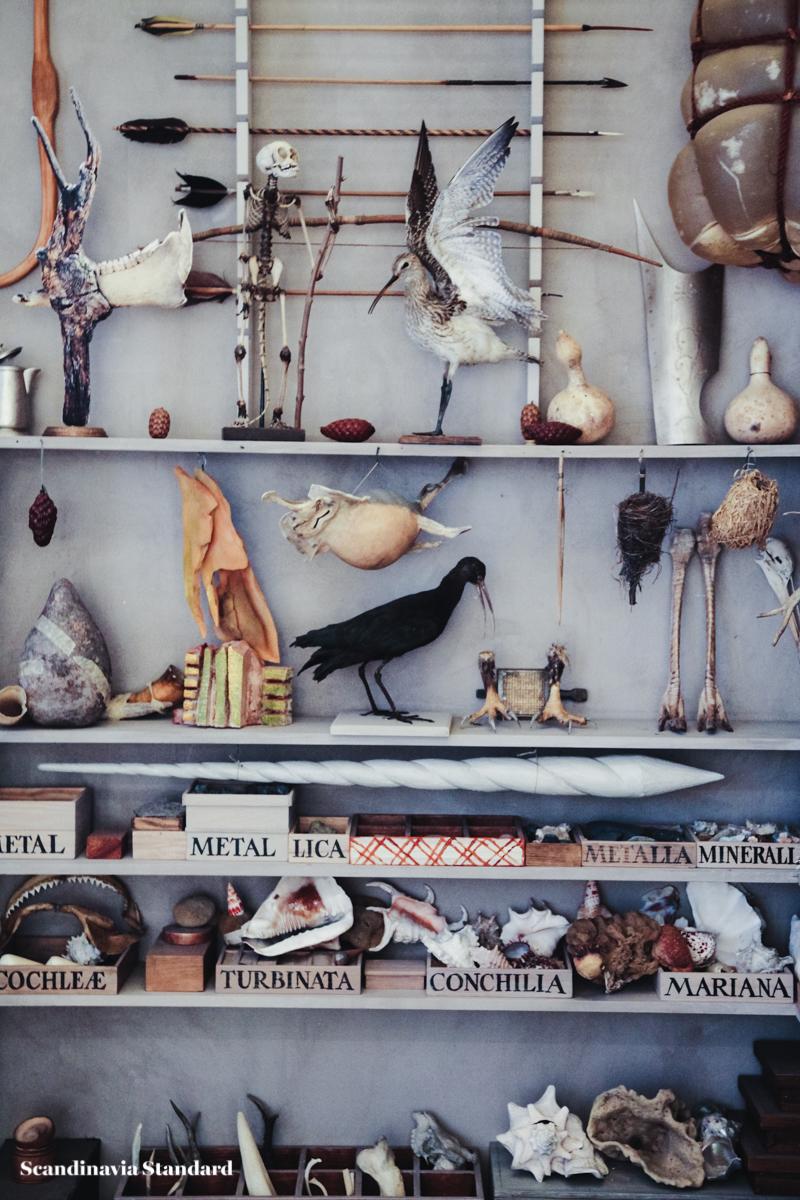 Taxidermy - Geological Museum - Geologisk Museum Copenhagen - Cabinet of Curiosities - Ole Worm | Scandinavia Standard