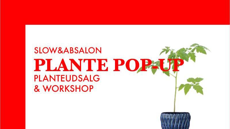 plant pop up